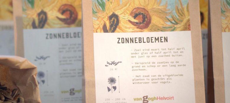 Zonnebloem zaden pitjes van Gogh Helvoirt